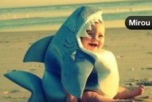 Cute sharks