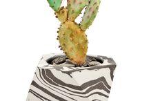Hard / bugs, cactus,