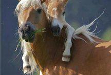 Horses, Riding