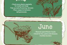 Garden Tips / Cool tips to help your garden grow!