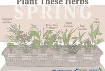Spice Up Your Herb Garden / Wake up your taste buds with these delicious herb and spices articles