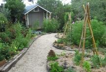 Yard and Garden / by Terry Gardner