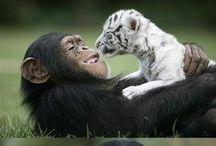 Beautiful animals -
