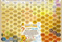 Pollen Color & Nectar Charts for Honeybees / We've compiled an abbreviated chart listing pollen color & pollen & nectar offerings in relation to honey bees' beneficial values. Please research these plants growing capabilities & flowering times for your region. The pollen & nectar values may differ for your region & climate.