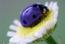 Ladybird. lieveheersbeestje