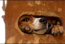FOTAS News / News stories about Friends of the Animal Shelter Aiken SC.