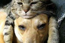 Jak pies z kotem! / Dogs and cats