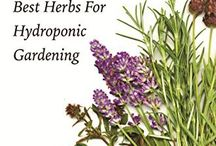 Hydroponic Herbs
