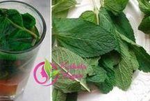 karaciğer ve zayıflama çayı