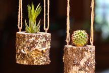 Succulent - Piante grasse