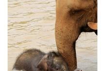dierenrijk / kijken naar dieren brengt innerlijke rust en geeft een geluksgevoel