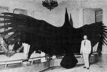 Thunderbird & Legendary Creatures