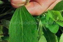 planta para el cigarro