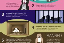Infographics & cat care advice / Cat care advice, feline facts and statistics.