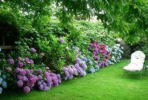 Gardening - shrub borders