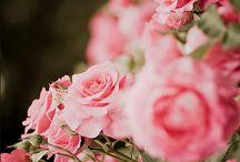 Rose Garden of Dreams