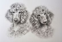 Poodle art / by Amanda Price