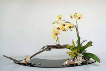 Fleurs, compositions florales, Plantes