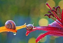 Snail , lady bug and butterfly