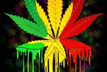 Marijuana leaves / Beautiful leaves!