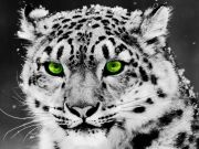 Black & White Creatures / by Lynn Wanner