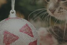 Gatti a Natale - Cats at Xmas / Aforismi e foto di Natale - Cat Christmas quotes