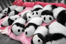 Panda things =o) / All u need is panda =o)
