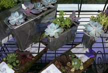 Succulent Garden  containers / A long lasting  growing plant very low  maintenance and set in stone or funky containers. Also our new range of bird boxes.