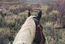 .horse.love.
