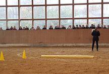 Pferdeveranstaltungen / Seminare, Workshops, Reitkurse, PferdeTermine, Vorträge für Reiter