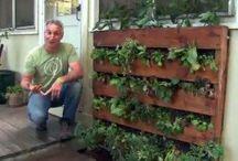 In the Garden / Garden ideas, inspiration, instruction & decor