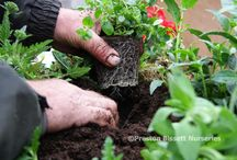 Gardening DIYs