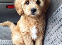 cute pets/things