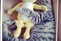 My Little cat! / Sleep with Yelly,the Yellow mouse!