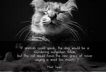 Cat Inspired Quotes