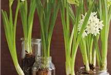 Thanksgiving Activity for kids planting Paperwhites / We have lots of kids and seniors at thanksgiving. I think this is a great take home idea on Tday