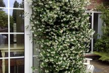 Begroeiing tuin