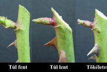 Növények metszése