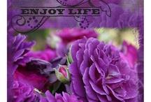 Color -me-in-Purple