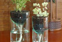 aménagement plantes