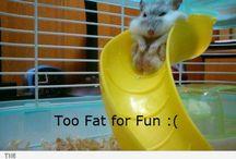 animals funny