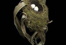 Nests, Eggs & Feathers / by Sherri Fandrich