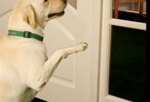 Products for your Favorite Pet / Products that make your favorite Pets life easier!