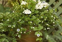 Blomlådor