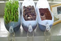 Gardening ideas / Gardening ideas and inspiration