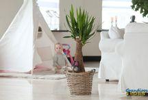 Groene kamerplanten / Groene planten zuiveren de lucht in jouw omgeving, en verlevendigen je interieur. Letterlijk en figuurlijk.