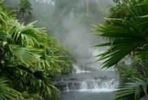 Costa Rica / by WKU Study Abroad