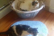 Gatti amore puro