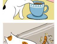 cats humor