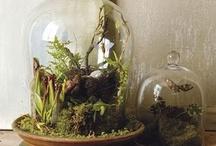 terrariums & bell jars / by Denise Davis ~ Sassafras Hill